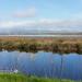 San Pablo Bay National Wildlife Refuge [Feb 10]