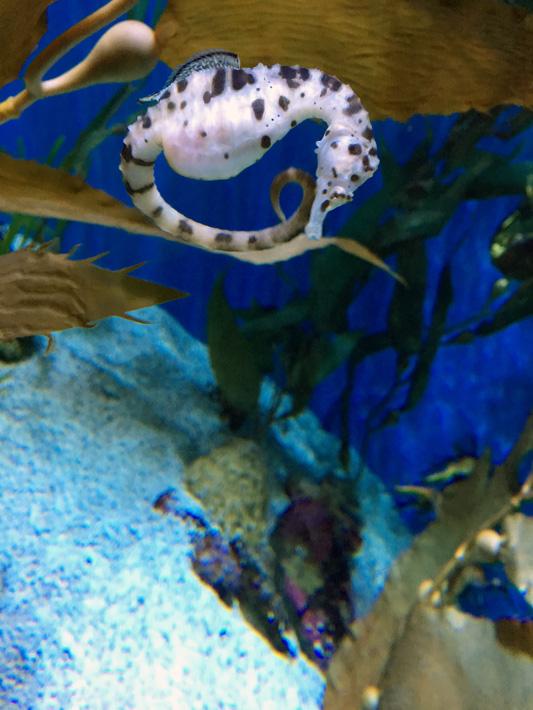 060516_aquarium37