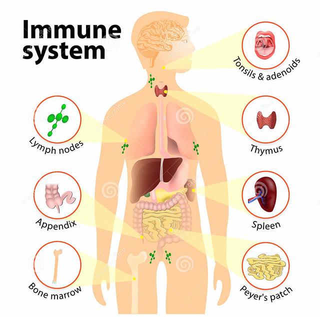 uống mật ong hàng ngày giúp tăng cường hệ thống miễn dịch