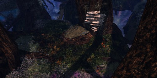 Fairelands Junction: Forest Floor