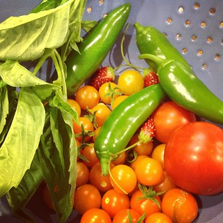 Yummy treats that i just harvested from my garden. | by Jenniffier