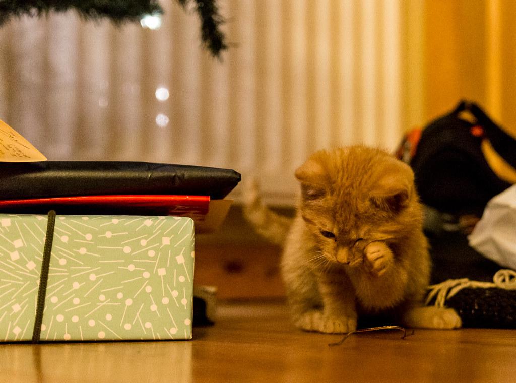 Looking tearful | Jonesy the little ginger kitten | Pete D | Flickr Kitten