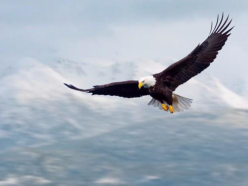 6-flying