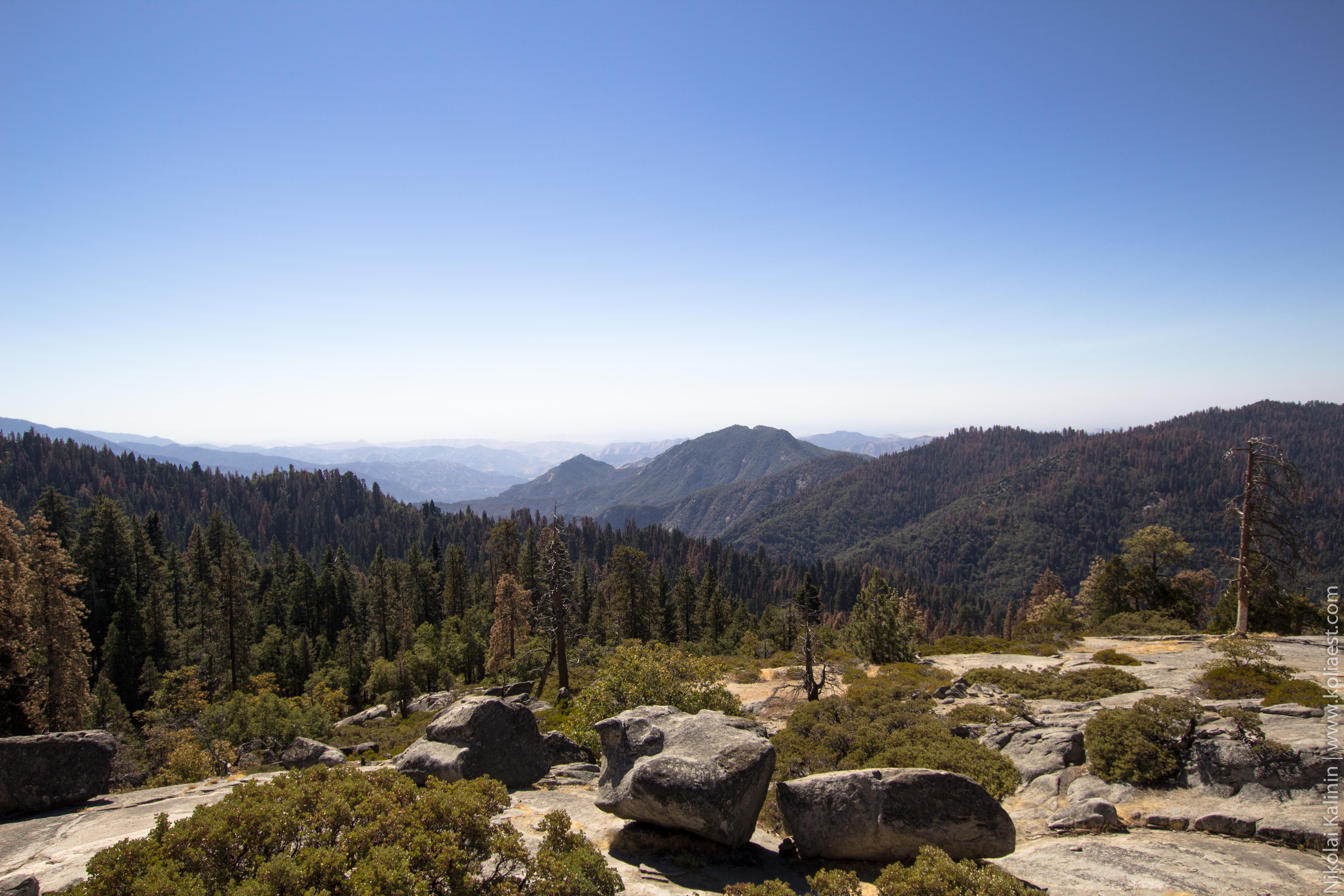 Sequoia-76