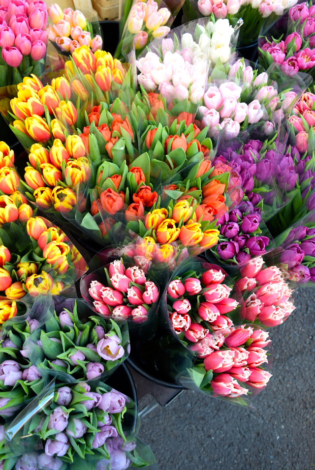 Tulips at Columbia Road Flower Market | www.rachelphipps.com @rachelphipps