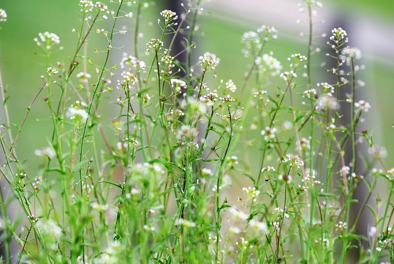Wild flowers 24.03 (5)