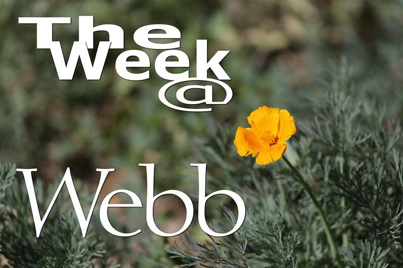 The Week @ Webb - Earth Day Beauty
