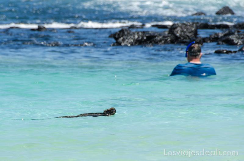Isla Santa Cruz viajar a Galápagos por tu cuenta
