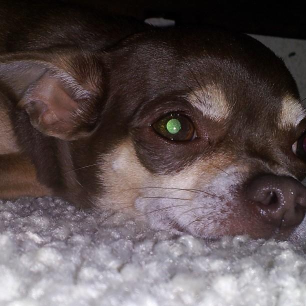 Green Dog Mobile Grooming Glendale Az