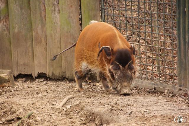 Ausflug Zoo Magdeburg 11.03.2017 Teil. 29