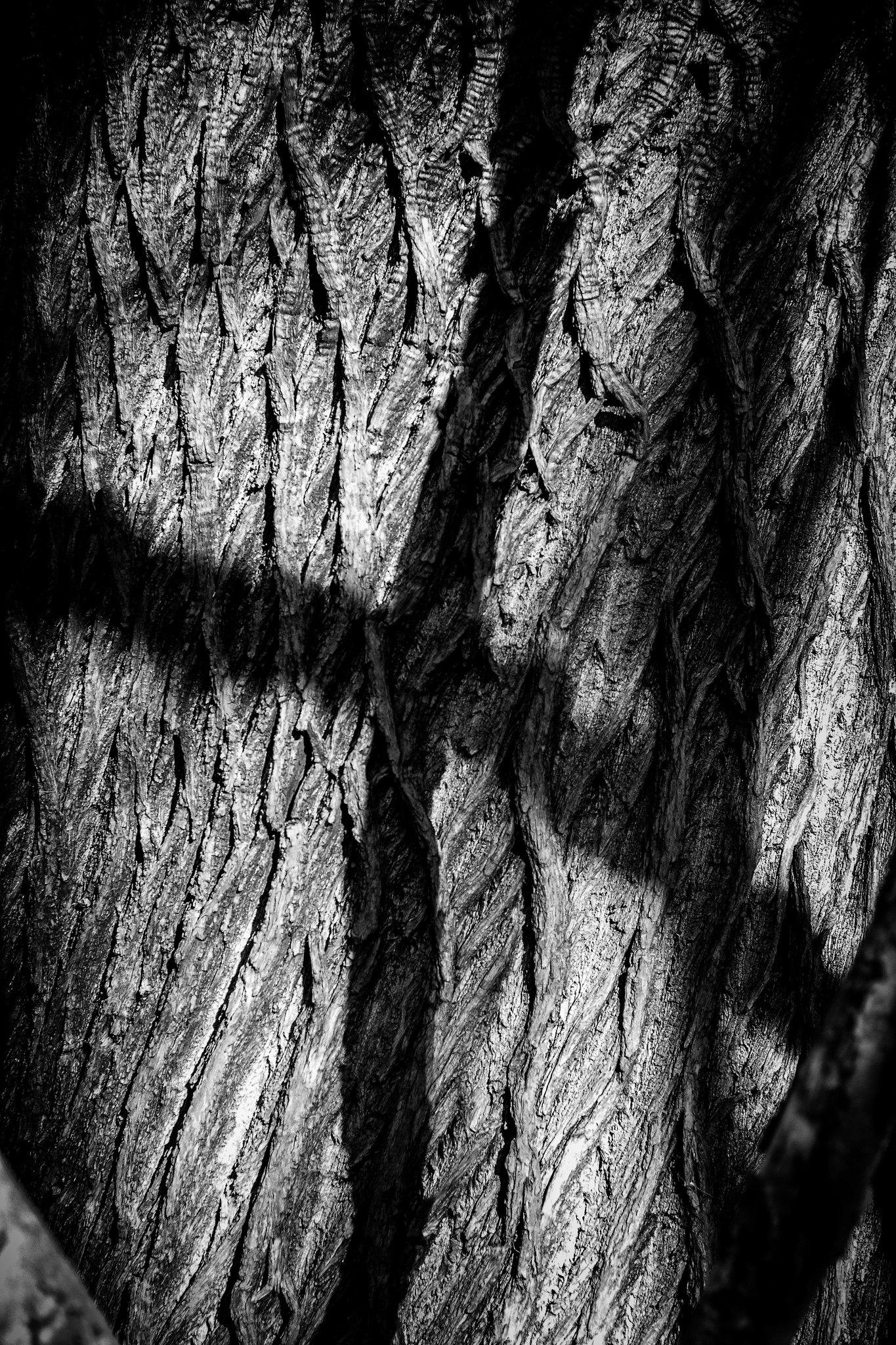 Criss Cross Tree
