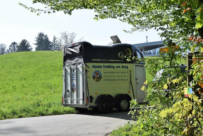 Truck with Alpaca 12.04.2017