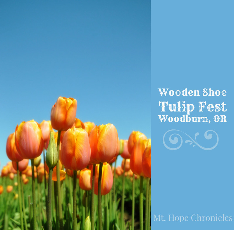 Wooden Shoe Tulip Fest @ Mt. Hope Chronicles