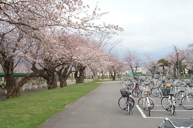 今年の桜5 α57 + AF 28mm F2.8