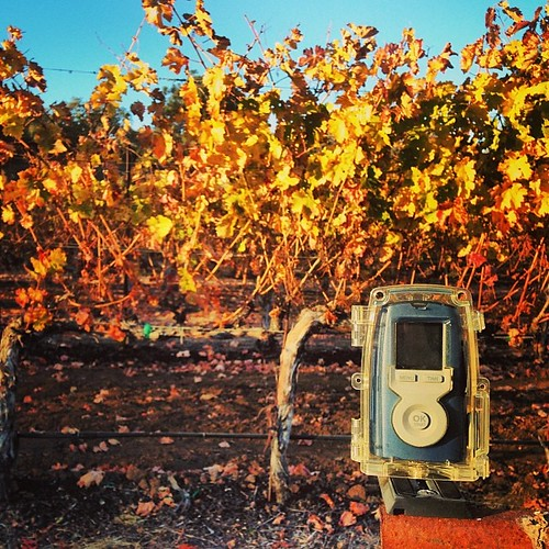 The 2013 year time-lapse of our Cabernet vines is almost complete. | by jordanwinery.com