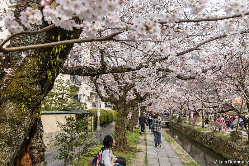 Paseo-Filosofia-Kioto-13