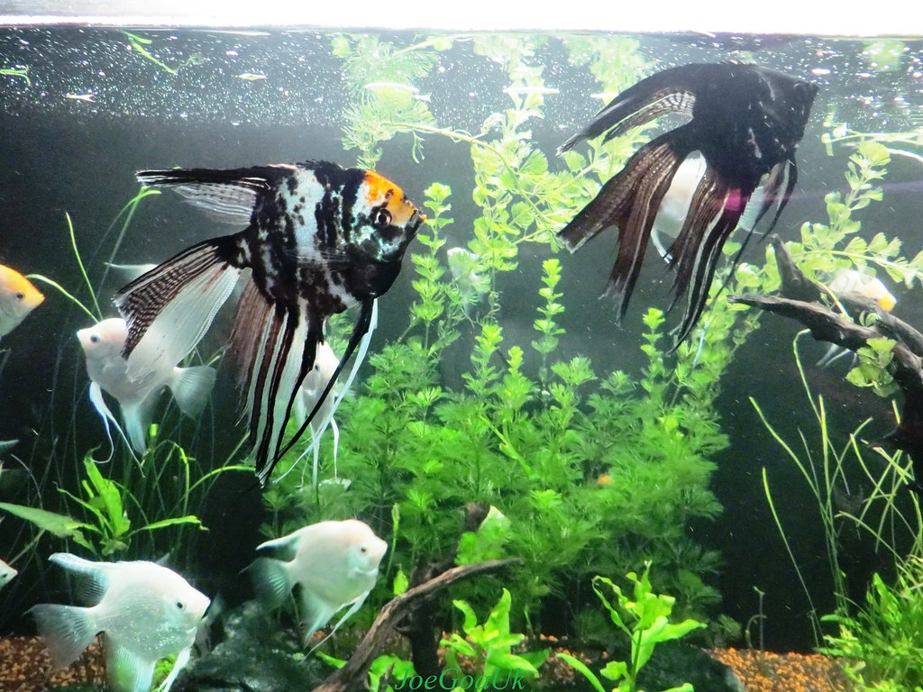 Fish aquarium verna goa - Fish Aquarium Goa By Joegoauk73