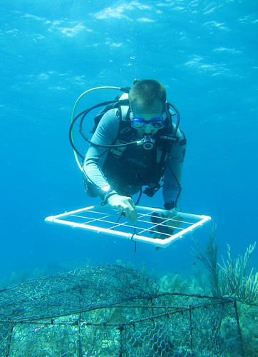 Coral research | by Oregon State University