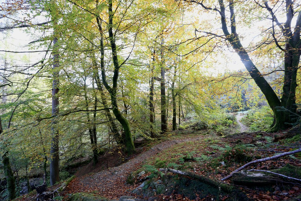 Autumn trees, Stank Glen