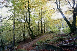 Autumn trees, Stank Glen | by Nick Bramhall