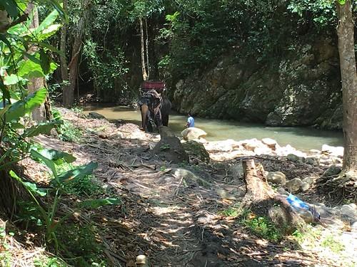 今日のサムイ島 5月1日案外涼しい!ナムアンの滝1 象トレッキング