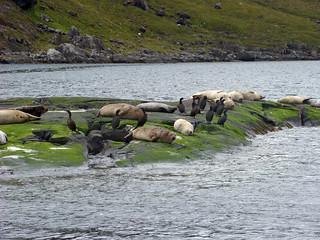 066 Zeehonden en aalscholvers