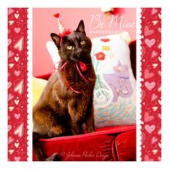 Valentine-Jack-by-Johanna-Parker-Design