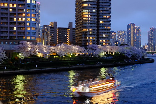 night sakura viewing cruise