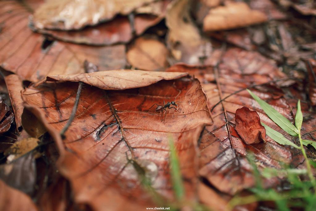IMG_Flickr-37