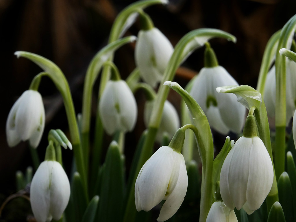 The First Flowers Of Spring Heili Rtel Flickr