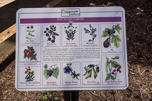 Five Senses Garden - Taste