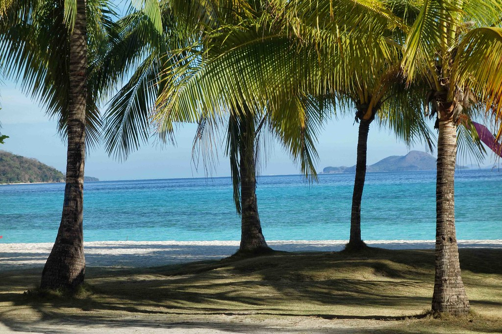 Coron - Malcapuya Island Beach Palmier