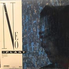 KOHARU KISARAGI:NEO PLANT(JACKET B)