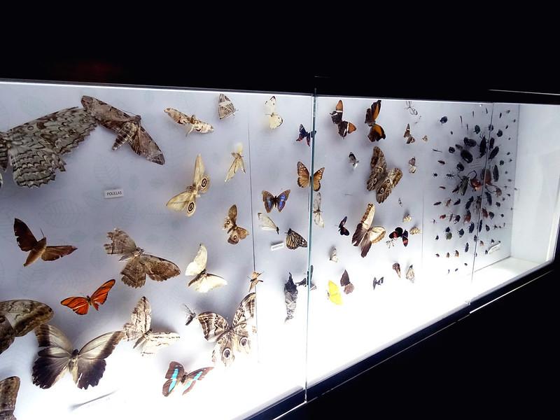 borboletas expostas numa vitrine