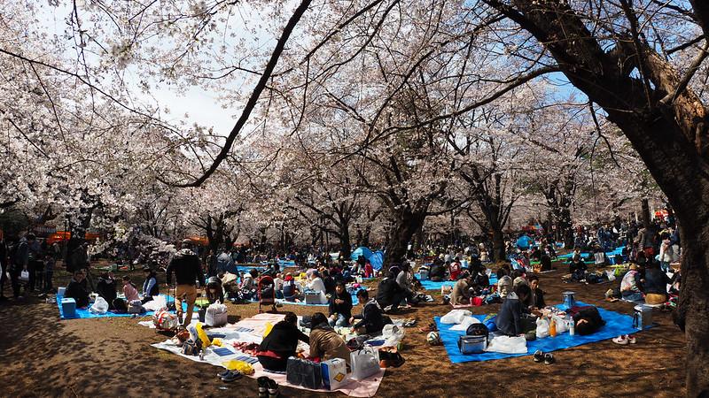 埼玉 大宮公園|東京都 Tokyo