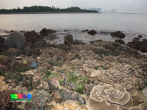 Living reefs of Kusu Island overlooking the city