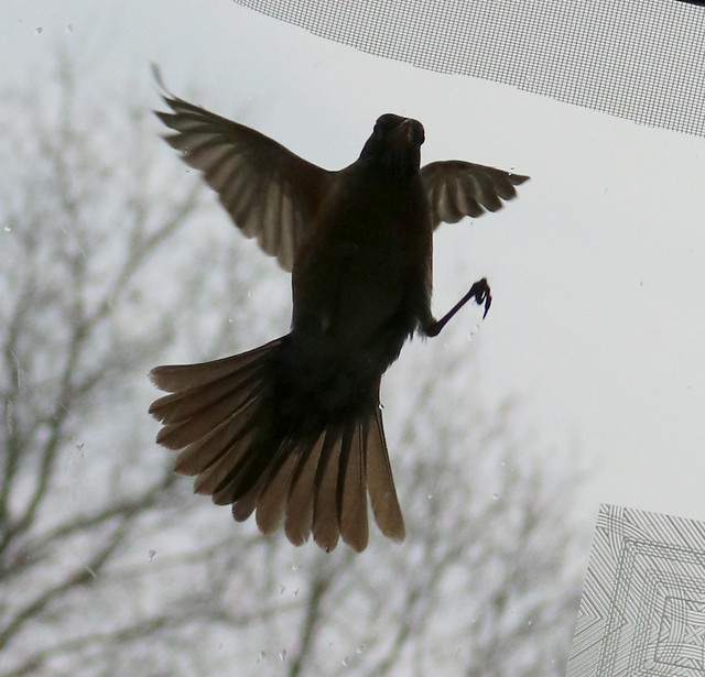 silhouette from the left side, wings back, right leg and claws visible
