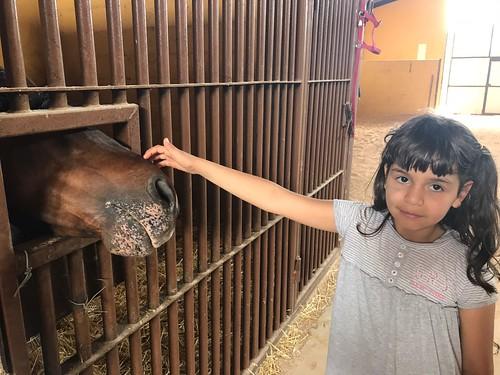 Excursión granja escuela Villarrobledo