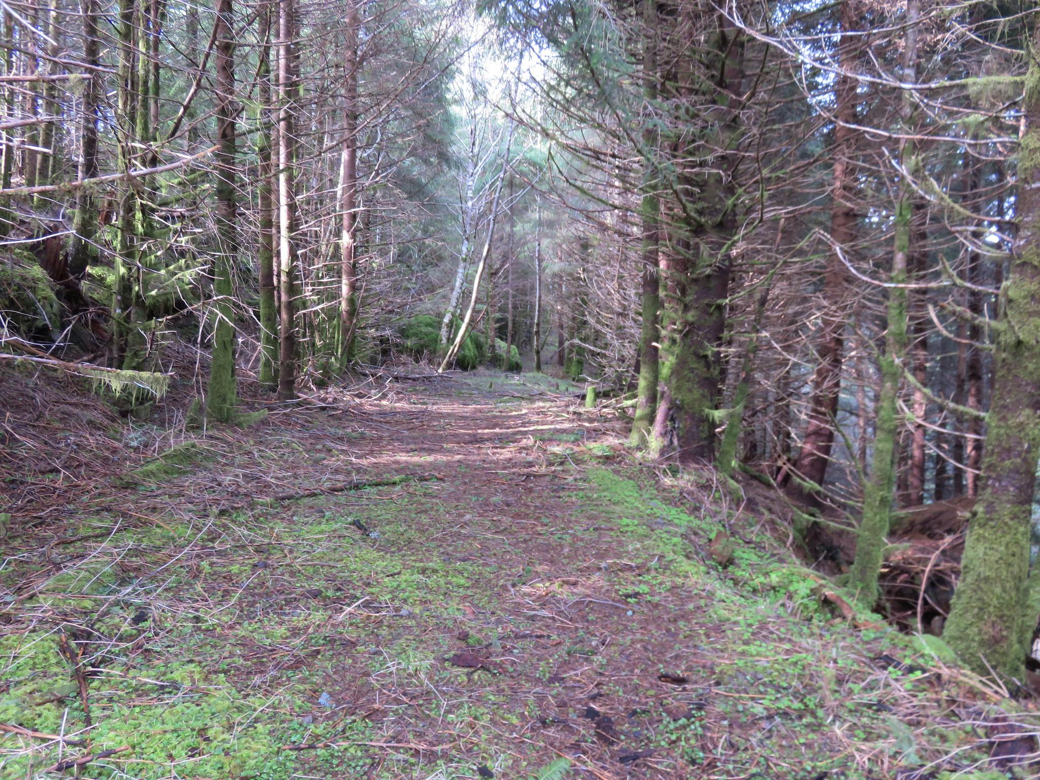 Arch Cape Mill Road