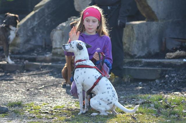 Dog Endurance 2014