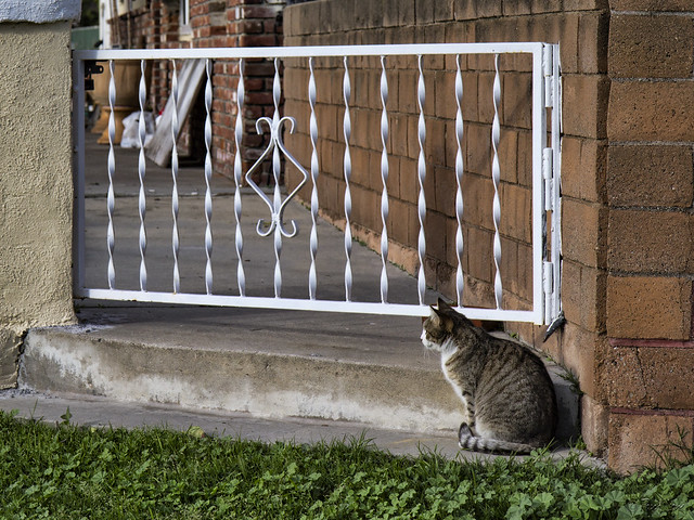 Cat at gate