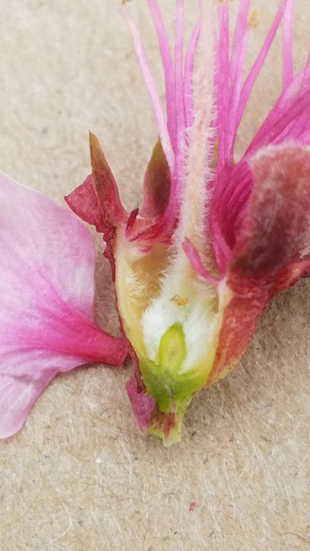 Peach flower damage