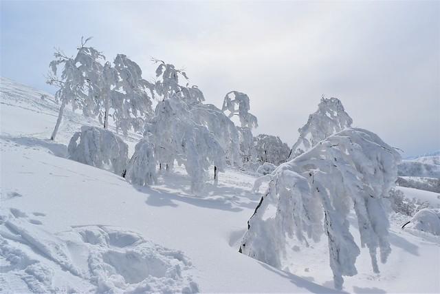 守門岳の樹氷・スノーモンスター(アイスモンスター)
