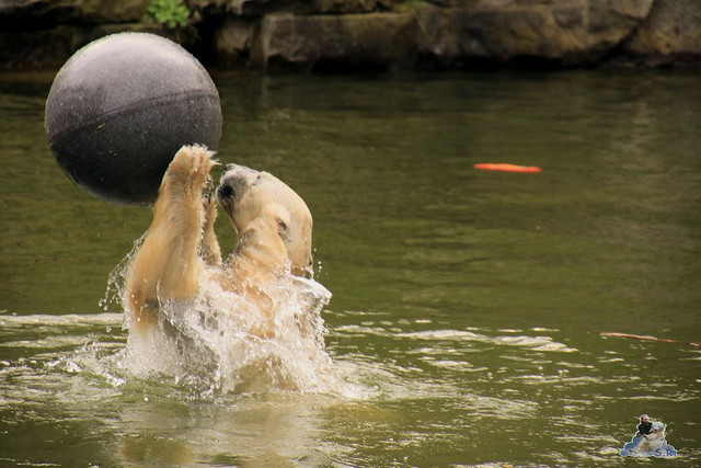 Tierpark Berlin 02.04.2017 070