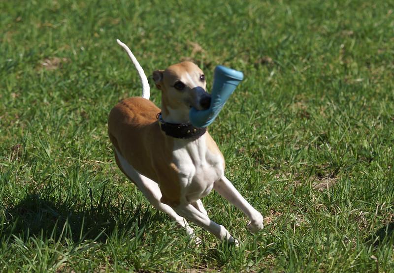 Frisbee-Junkie Nr. 2: Latoya