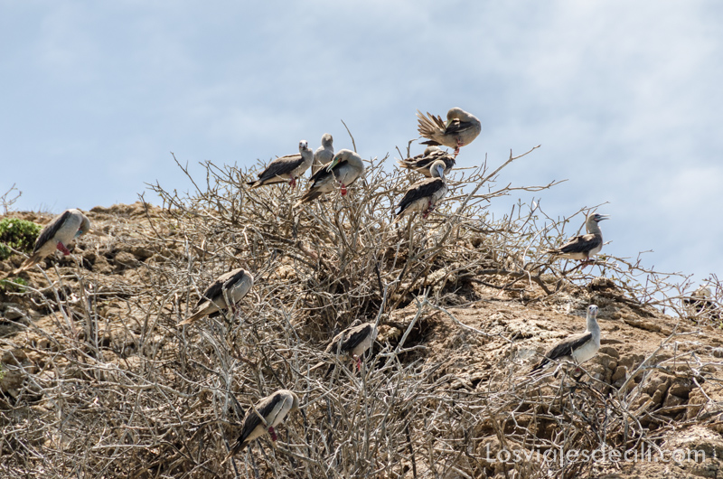 aves en isla San Cristóbal