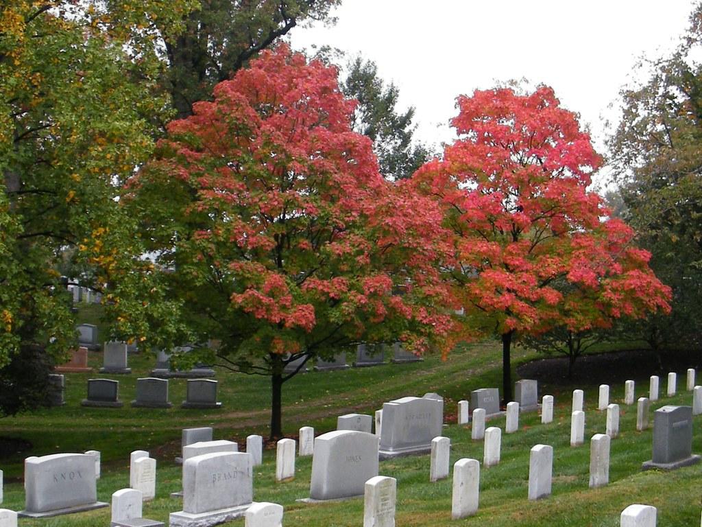 Sugar maples in Arlington National Cemetery Virginia. | Flickr