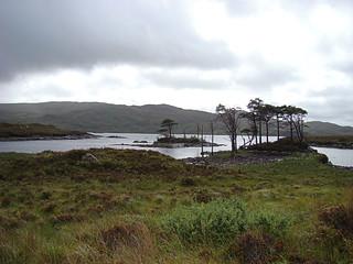 062 Bomen op eilandje in Loch Assynt