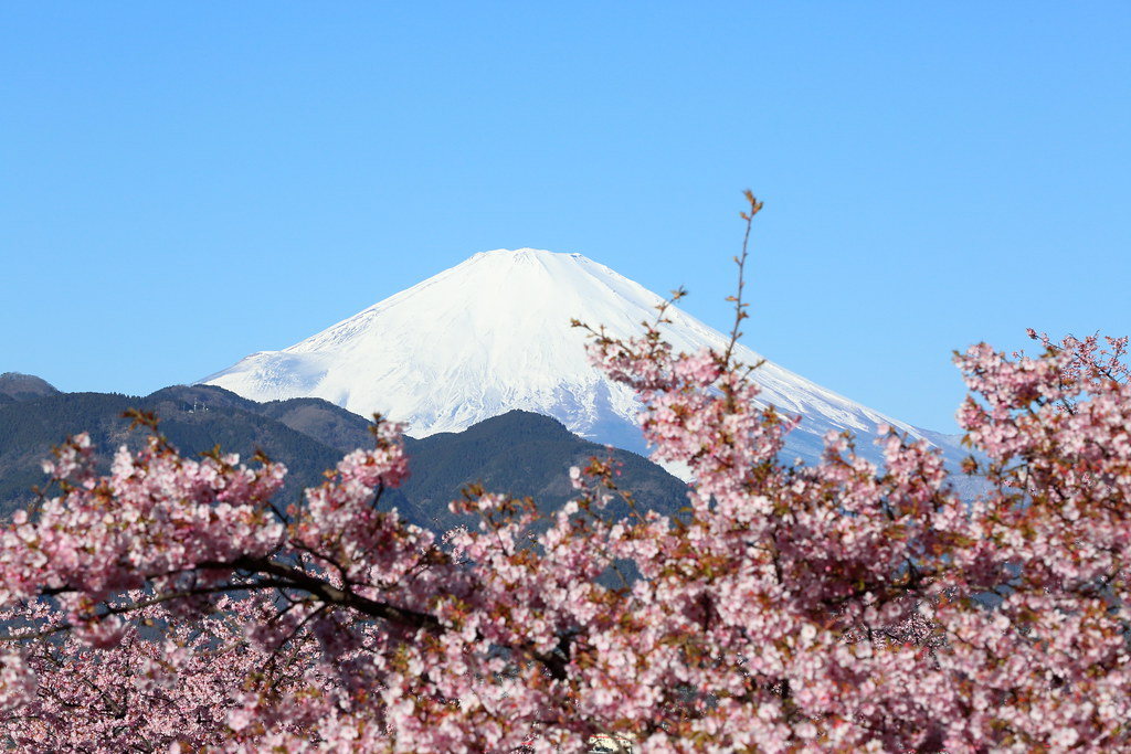 Mt. Fuji with cherry blossoms.