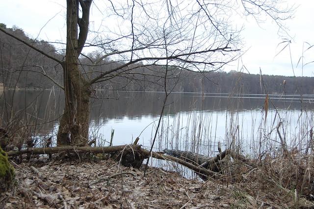 Bild: Das Ufer des Mollensee. Braune Schilfhalme, Bäume noch ohne grüne Blätter, ein ruhiger Wasserspiegel